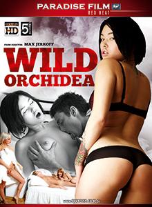Wild Orchidea