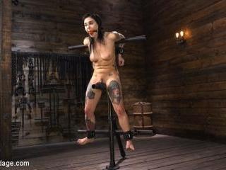 Joanna Angel: Tattooed Slut Made to Cum in Gruelin