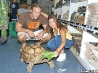 Turtle Tush